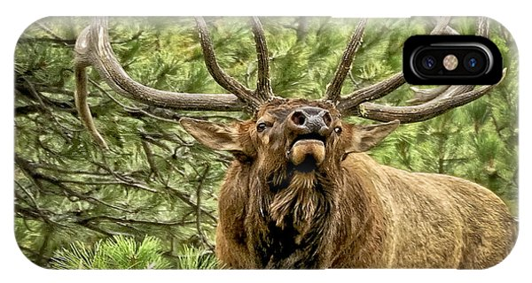 Bugling Bull Elk II IPhone Case