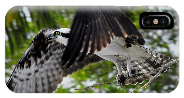 Ospreys iPhone Case - Building For The Future by Quinn Sedam