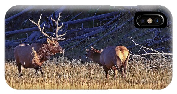 Bull And Cow Elk IPhone Case