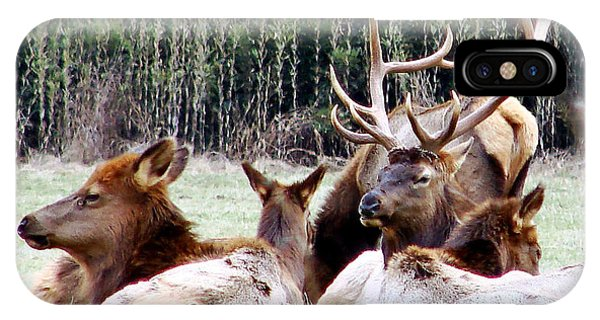 Bull Elk And His Girls 2 IPhone Case