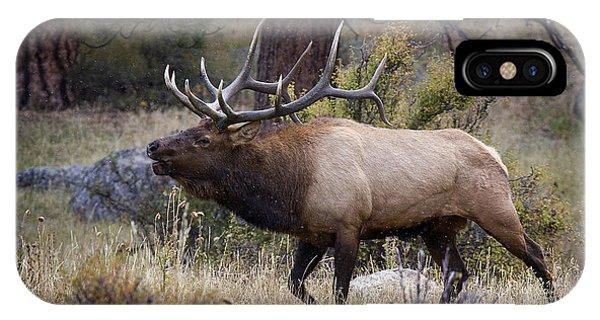 Bull Elk Bugle IPhone Case