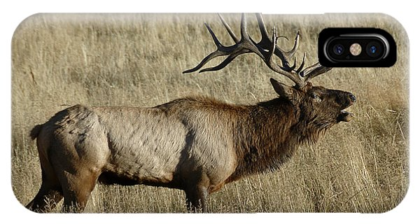 Bull Elk Bugling IPhone Case