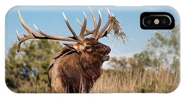 Bull Elk Call IPhone Case