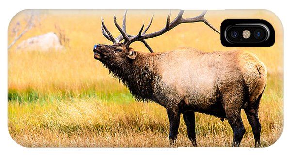 Bull Elk - Colorado IPhone Case