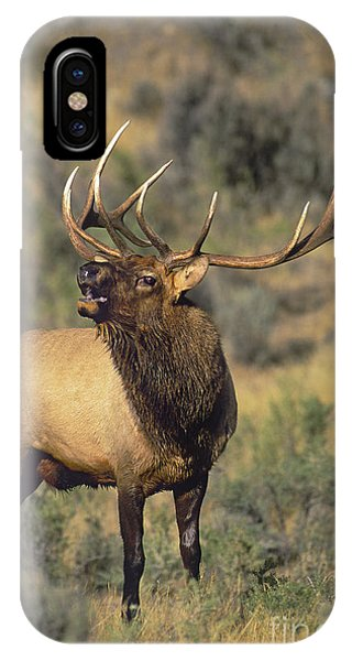 IPhone Case featuring the photograph Bull Elk In Rut Bugling Yellowstone Wyoming Wildlife by Dave Welling