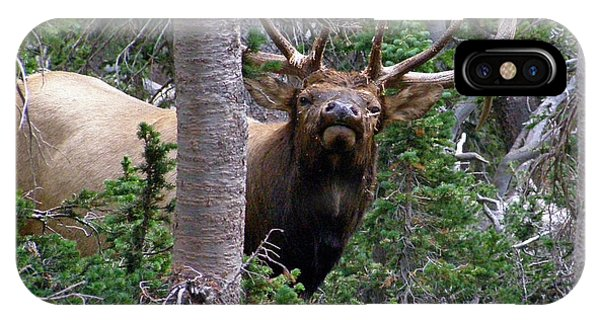 Bull Elk Looking At Me IPhone Case