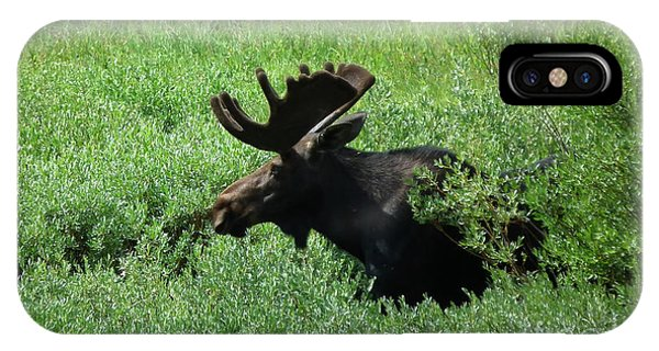 Bull Moose 1 IPhone Case
