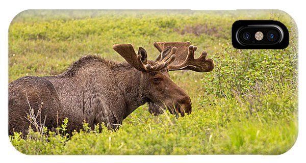 Bull Moose IPhone Case