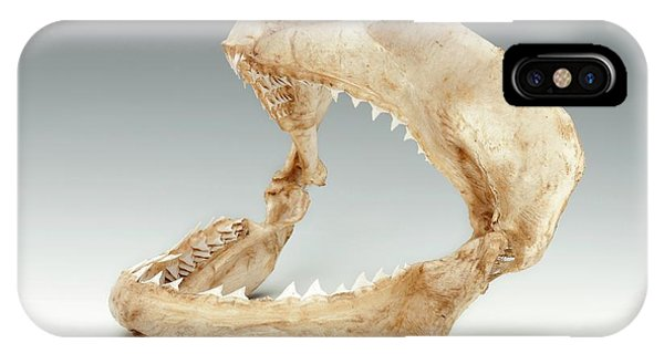 Bull Shark Jaws Phone Case by Ucl, Grant Museum Of Zoology