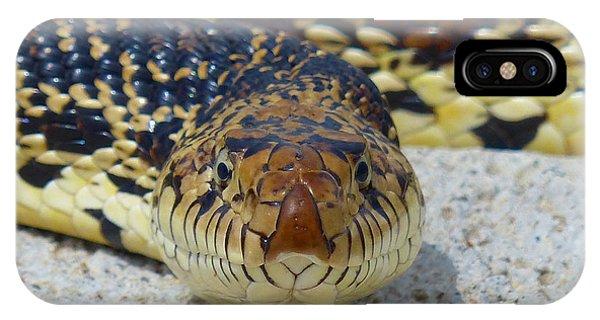 Bull Snake Stare IPhone Case