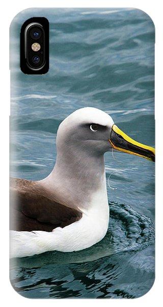 Albatross iPhone Case - Buller's Albatross (thalassarche Bulleri by Micah Wright