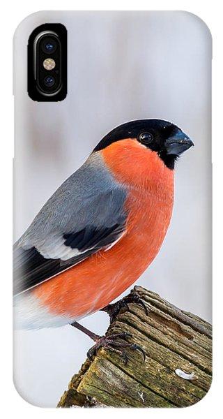 Bullfinch On The Edge IPhone Case