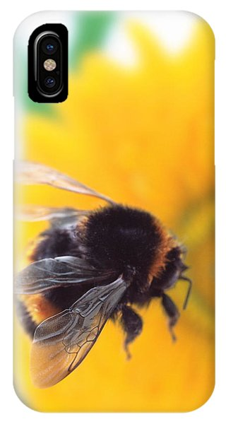 Pollination iPhone Case - Bumble Bee With Flower by Gustoimages/science Photo Library