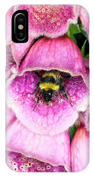 Bumblebee And Foxglove Hybrid Phone Case by Dr Jeremy Burgess/science Photo Library