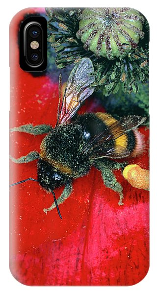 Pollination iPhone Case - Bumblebee Collecting Pollen From Poppy by Dr Jeremy Burgess/science Photo Library