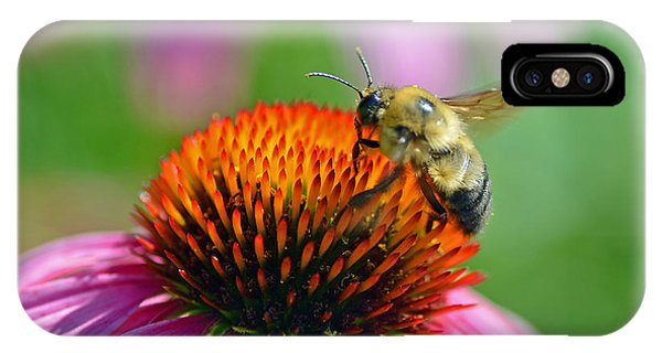 Bumblebee On A Coneflower IPhone Case