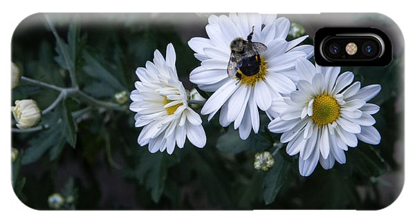 Bumblebee On Daisy IPhone Case