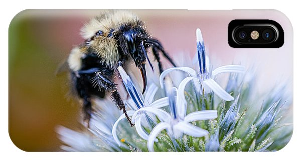 Bumblebee On Thistle Blossom IPhone Case
