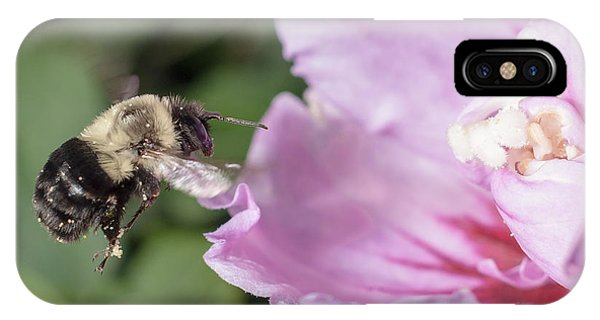 bumblebee to Rose of Sharon IPhone Case