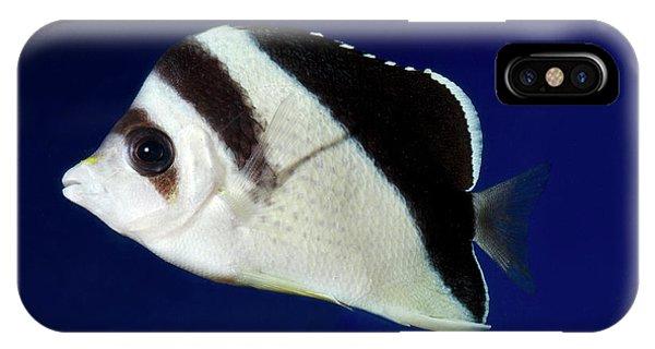 Burgess' Butterflyfish Phone Case by Nigel Downer
