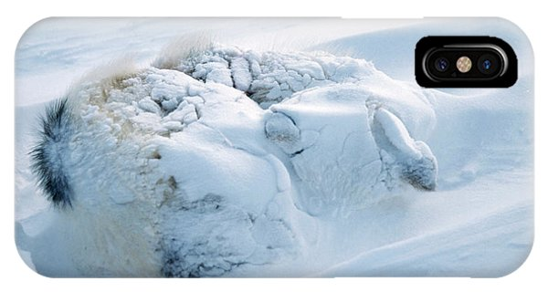Sled Dog iPhone Case - Buried Husky Dog by Simon Fraser/science Photo Library