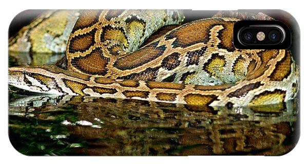 Burmese Python, Python Molurus IPhone Case