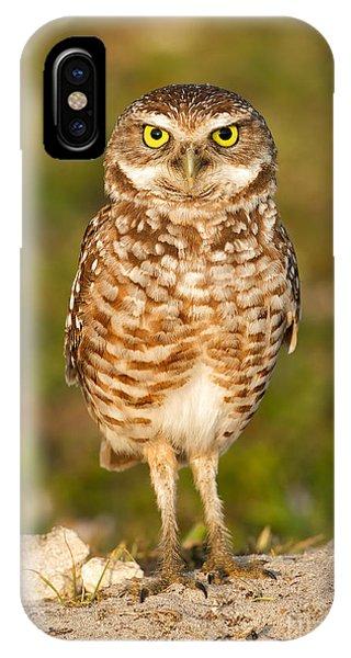 Burrowing Owl Phone Case by Joshua Clark