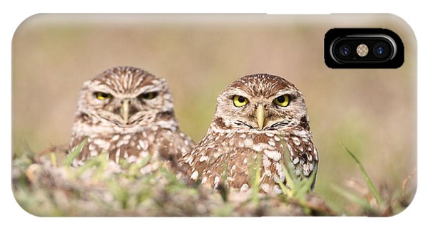 Burrowing Owl Pair IPhone Case