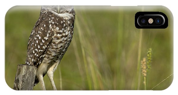 Burrowing Owl Stare IPhone Case