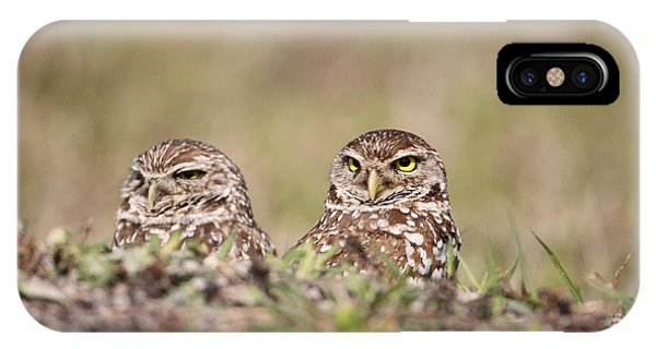Burrowing Owls IPhone Case