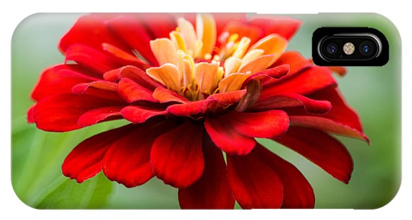 Bursts Of Color IPhone Case