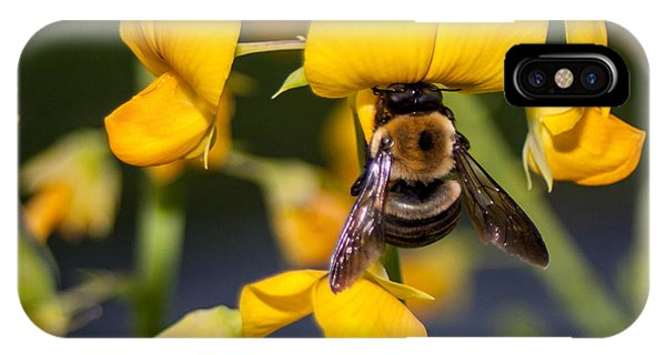 Busy Bee 3 IPhone Case