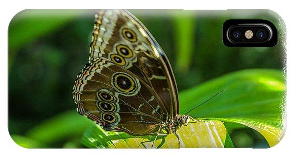 Butterflies Phone Case by Joe Oliver