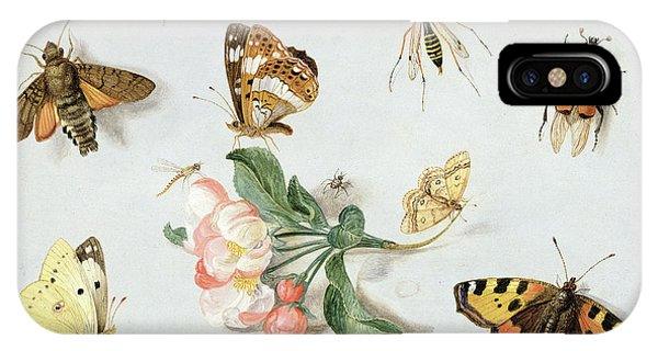Moth iPhone Case - Butterflies Moths And Other Insects With A Sprig Of Apple Blossom by Jan Van Kessel