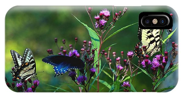 Butterflies Three IPhone Case