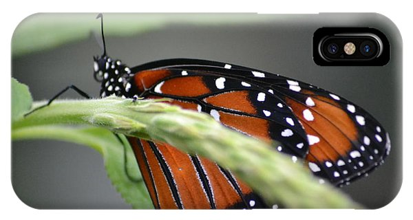 IPhone Case featuring the photograph Butterfly 1 by Michael Colgate