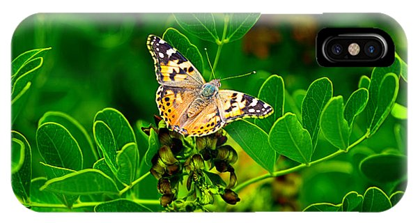 Butterfly In Paradise IPhone Case