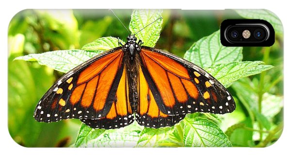 Butterfly In The Plants Phone Case by Van Ness
