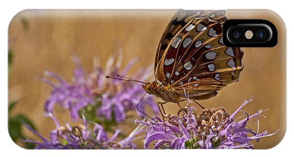 Butterfly On Bee Balm IPhone Case