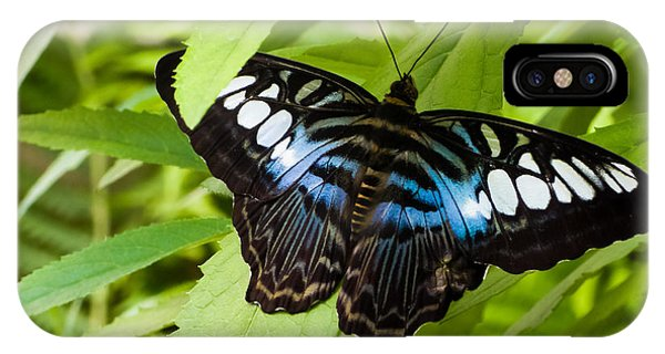 Butterfly On Leaf   IPhone Case