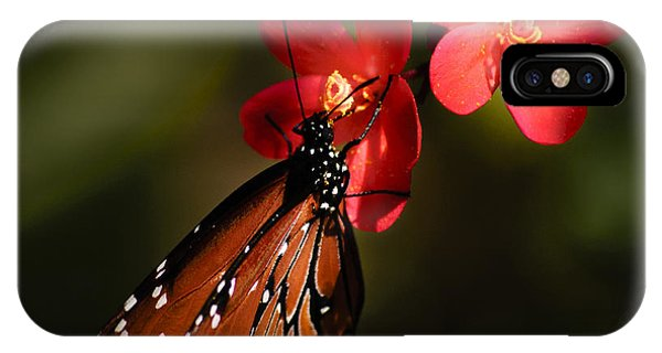 Butterfly On Red Blossom IPhone Case
