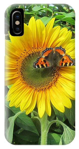 Butterfly On Sunflower IPhone Case