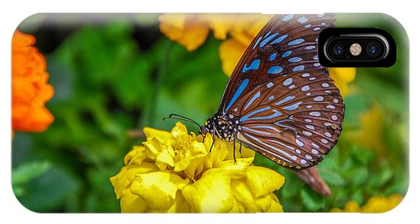 Butterfly On Yellow Marigold IPhone Case