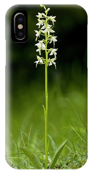 Butterfly-orchid (platanthera Bifolia) Phone Case by Bob Gibbons