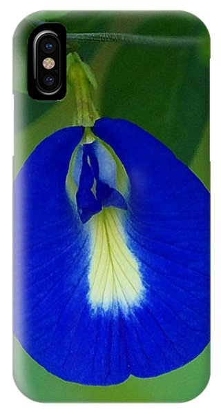 Butterfly Pea IPhone Case
