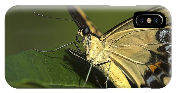 Butterfly Portrait IPhone Case
