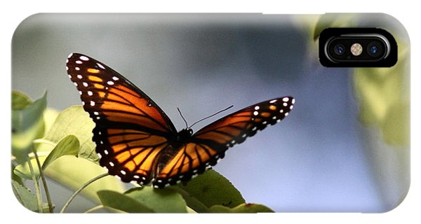 Butterfly -  Soaking Up The Sun IPhone Case