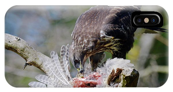 Carcass iPhone Case - Buzzard Preying On A Bird Carcass by Dr P. Marazzi