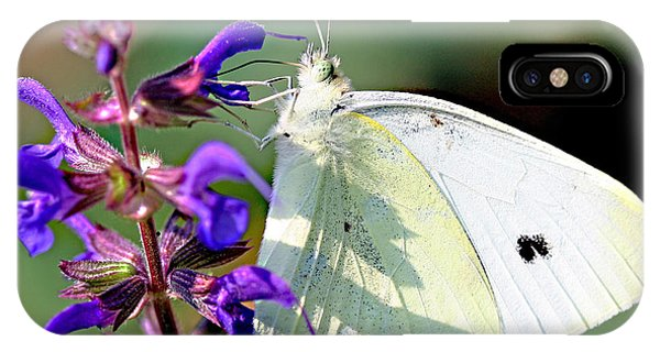 Cabbage White Butterfly Phone Case by Brian Magnier