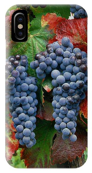 5b6374-cabernet Sauvignon Grapes At Harvest IPhone Case
